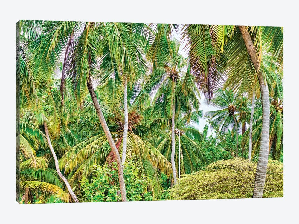 Palm Paradise by Mark Paulda 1-piece Art Print