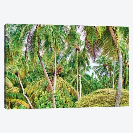 Palm Paradise Canvas Print #PAU240} by Mark Paulda Canvas Art Print
