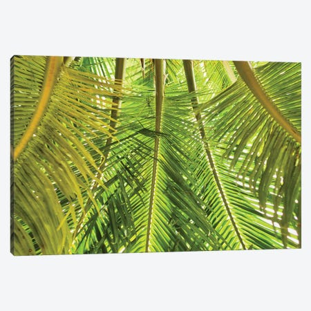 Green Palm Fronds Canvas Print #PAU244} by Mark Paulda Canvas Artwork