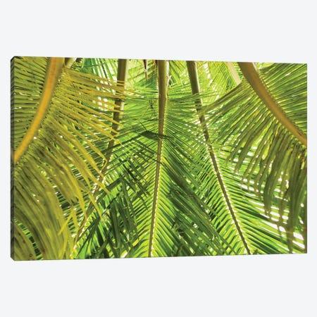 Green Palm Fronds Canvas Print #PAU244} by Mark Paulda Canvas Artwork