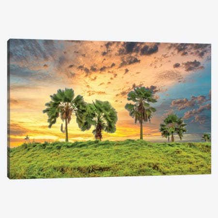 Palms At Sunset Canvas Print #PAU263} by Mark Paulda Art Print