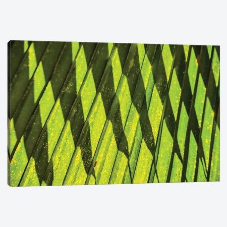 Palm Frond Shadow Canvas Print #PAU277} by Mark Paulda Canvas Print