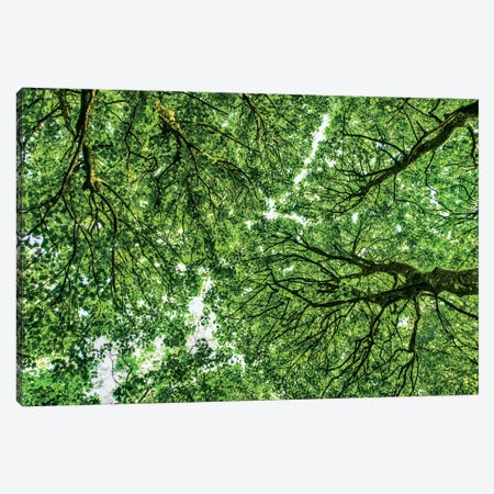 Tree Tops, Connemara, County Galway, Ireland Canvas Print #PAU30} by Mark Paulda Canvas Wall Art