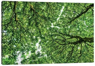 Tree Tops, Connemara, County Galway, Ireland Canvas Print #PAU30