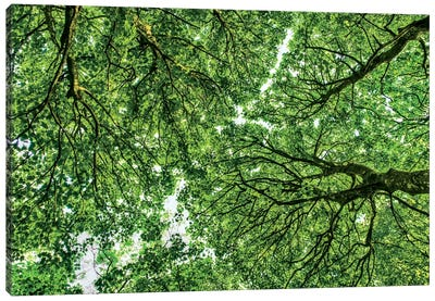 Tree Tops, Connemara, County Galway, Ireland Canvas Art Print