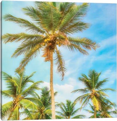 Barbados Palms Canvas Art Print
