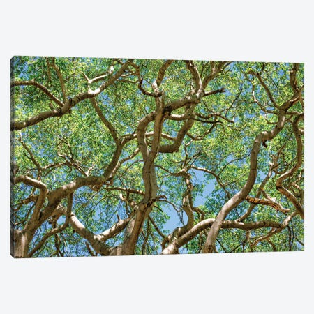 Tropical Trees Canvas Print #PAU334} by Mark Paulda Canvas Wall Art