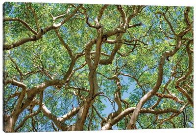 Tropical Trees Canvas Art Print