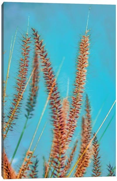Desert Grass Canvas Art Print