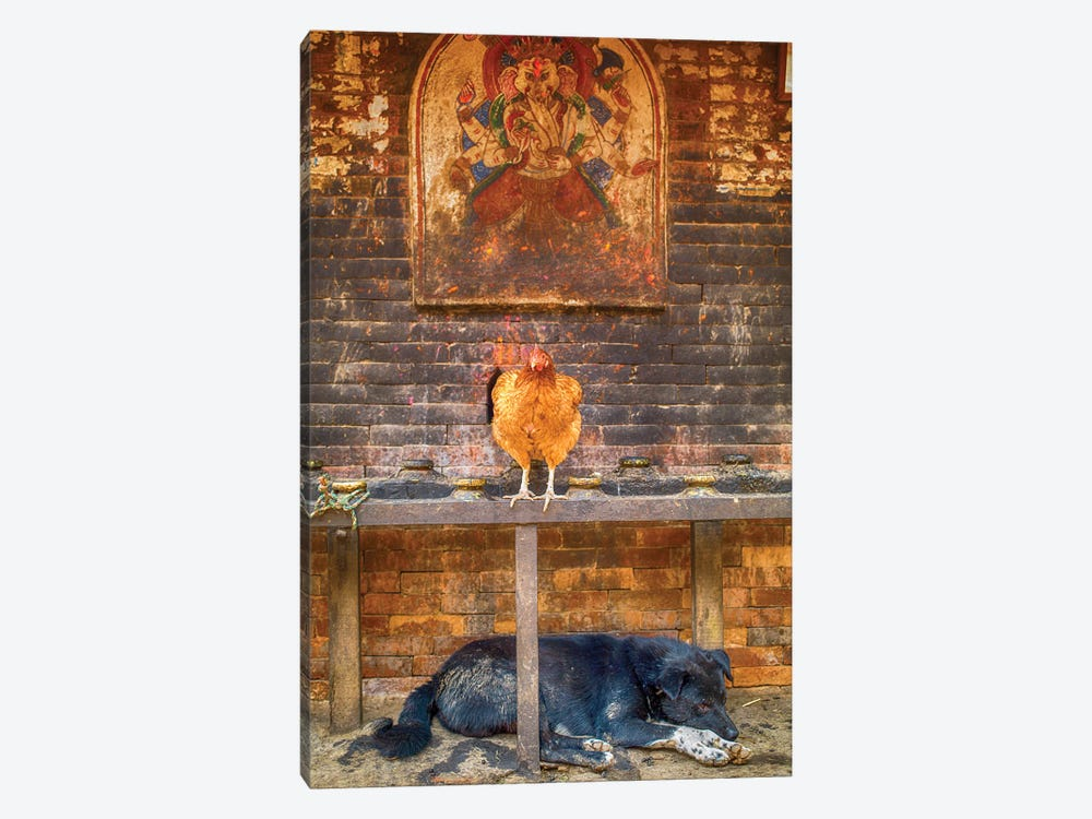 Bhaktapur Nepal Ganesh Hen And Sleeping Dog by Mark Paulda 1-piece Canvas Print