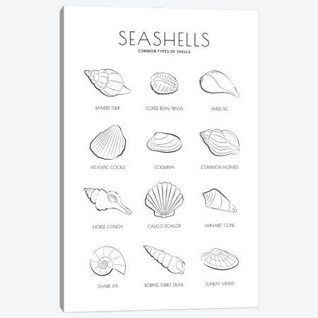 Sea Shells Canvas Print #PAV676} by Martina Pavlova Art Print