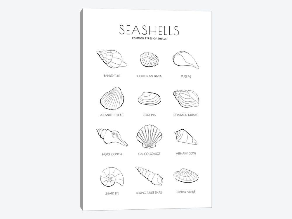 Sea Shells by Martina Pavlova 1-piece Canvas Art Print