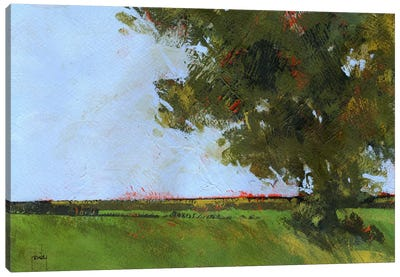Autumn Oak And Empty Fields Canvas Art Print