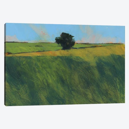 Lone Hedgerow Tree Canvas Print #PBA34} by Paul Bailey Canvas Art Print
