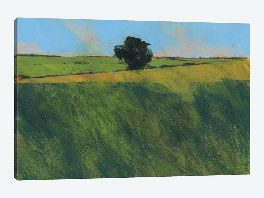Lone Hedgerow Tree by Paul Bailey 1-piece Canvas Art