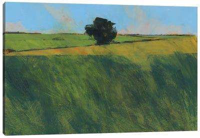Lone Hedgerow Tree Canvas Art Print