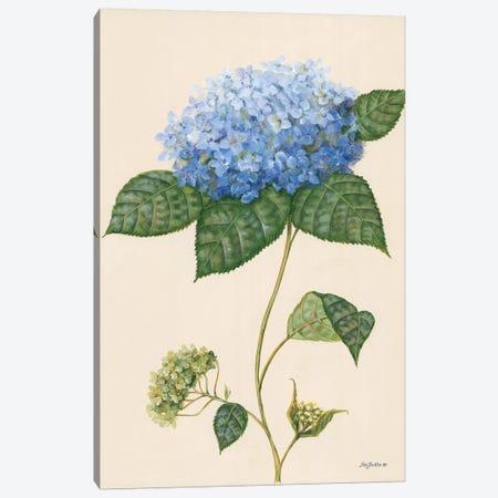 Blue Hydrangea Canvas Print #PBR13} by Pam Britton Art Print