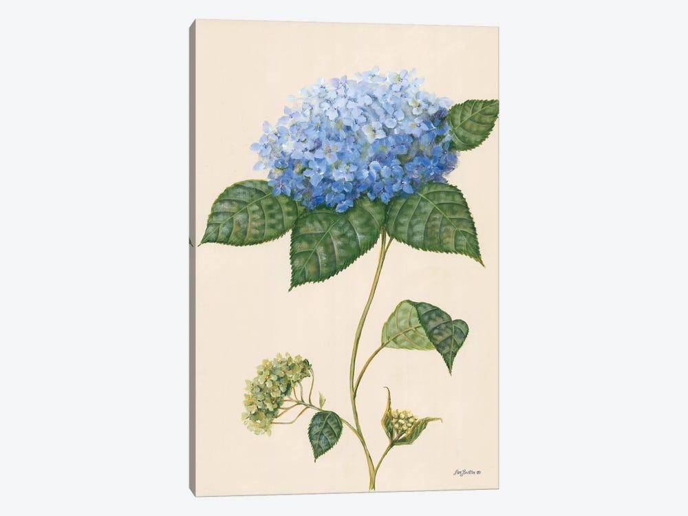 Blue Hydrangea by Pam Britton 1-piece Canvas Wall Art