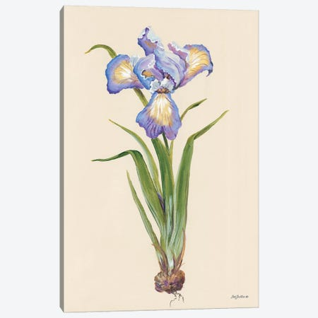 Blue Iris Canvas Print #PBR14} by Pam Britton Canvas Artwork