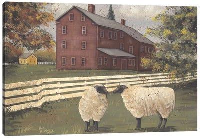 Hancock Sheep Canvas Art Print