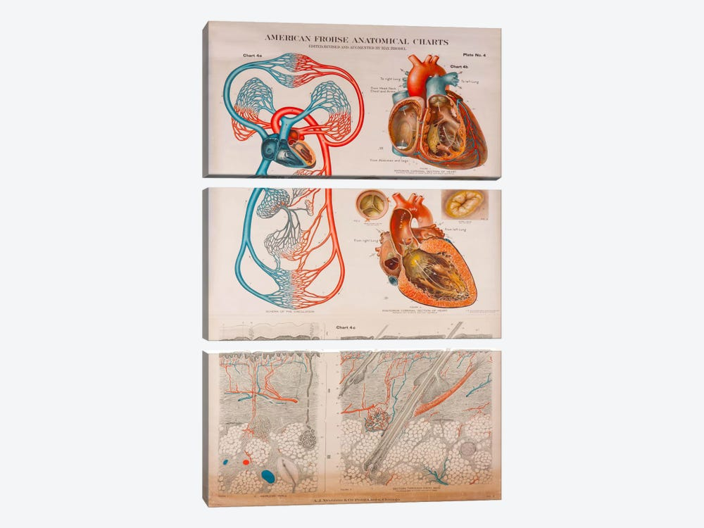 American Frohse Plate 4 by Print Collection 3-piece Canvas Artwork