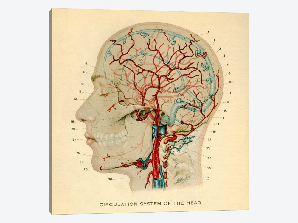 Brain_Head 032.1 1-piece Canvas Wall Art