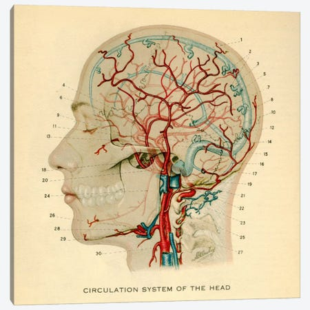 Brain_Head 032.1 Canvas Print #PCA148} by Print Collection Canvas Wall Art