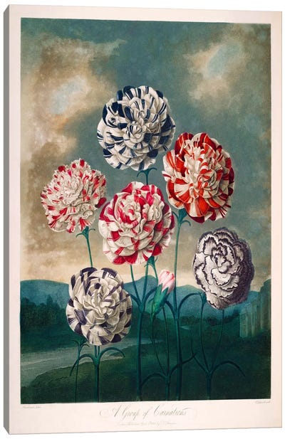 A Group of Carnations Canvas Art Print
