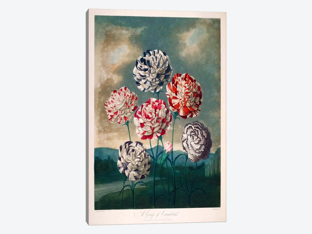A Group of Carnations by Print Collection 1-piece Canvas Print