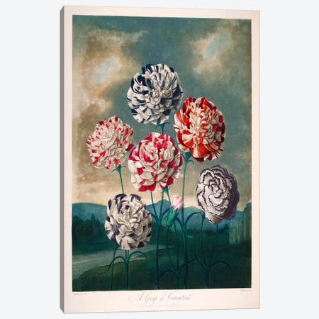 A Group of Carnations 3-Piece Canvas #PCA150} by Print Collection Canvas Print