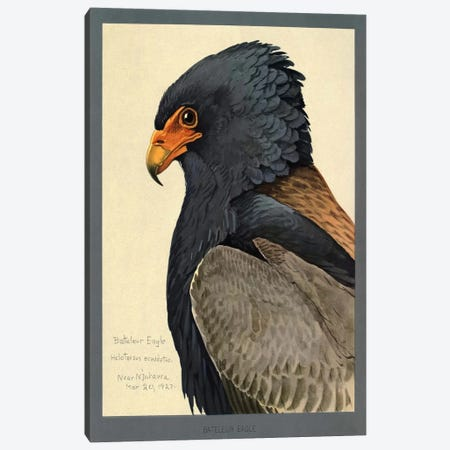 Abyssinian Bateleur Eagle Canvas Print #PCA151} by Print Collection Canvas Art Print