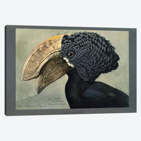 Abyssinian Crested Hornbill Canvas Print #PCA152} by Print Collection Canvas Art Print
