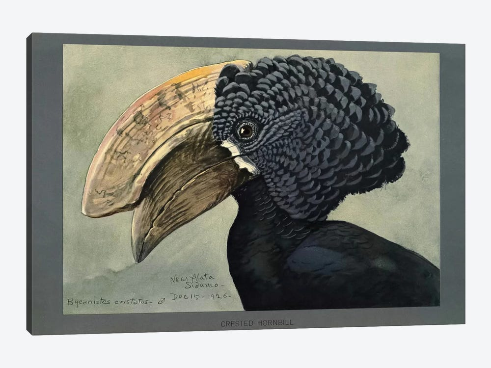 Abyssinian Crested Hornbill 1-piece Canvas Art Print