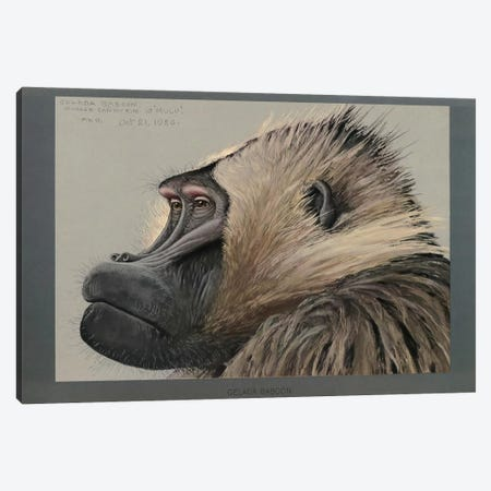 Abyssinian Gelda Baboon Canvas Print #PCA154} by Print Collection Canvas Artwork