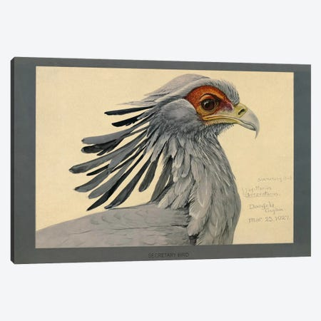 Abyssinian Secretary Bird Canvas Print #PCA156} by Print Collection Canvas Artwork