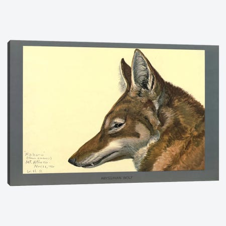 Abyssinian Wolf Canvas Print #PCA157} by Print Collection Canvas Wall Art