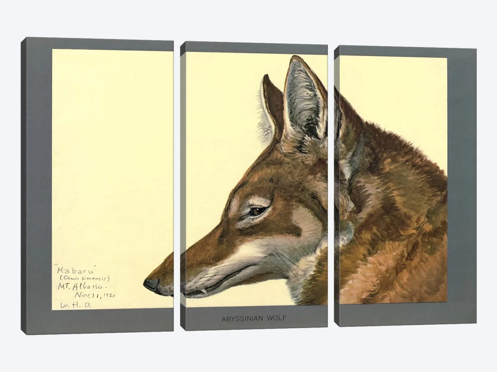 Abyssinian Wolf by Print Collection 3-piece Canvas Wall Art