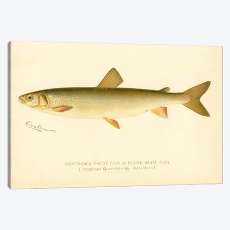 Adirondack Frost Fish Canvas Print #PCA160} by Print Collection Canvas Artwork