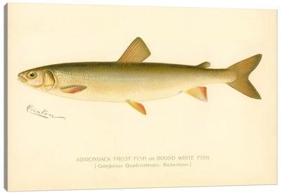 Adirondack Frost Fish Canvas Print #PCA160
