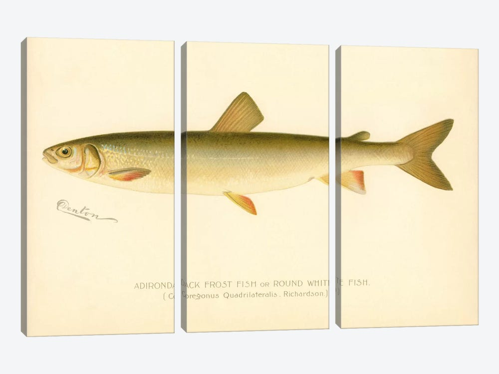 Adirondack Frost Fish by Print Collection 3-piece Canvas Artwork