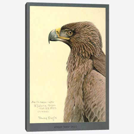 African Tawny Eagle Canvas Print #PCA161} by Print Collection Canvas Wall Art