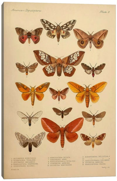 American Lepidoptera, Plate 3 Canvas Print #PCA163