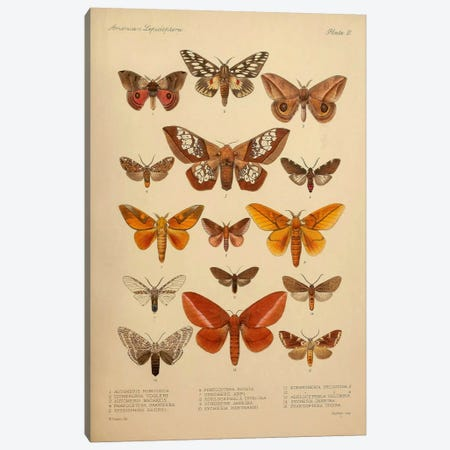 American Lepidoptera, Plate 3 Canvas Print #PCA163} by Print Collection Canvas Artwork