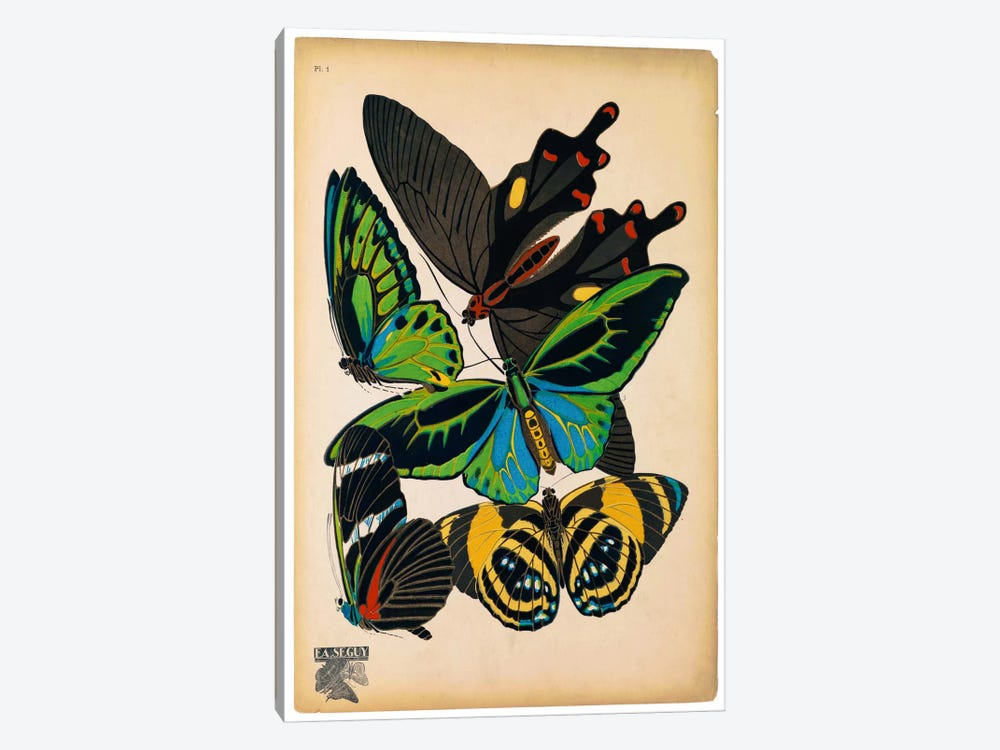 Butterflies Plate 1, E.A. Seguy by Print Collection 1-piece Art Print