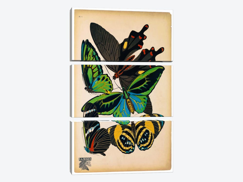 Butterflies Plate 1, E.A. Seguy by Print Collection 3-piece Canvas Art Print