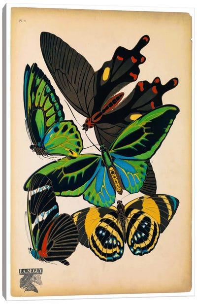 Butterflies Plate 1, E.A. Seguy Canvas Art Print