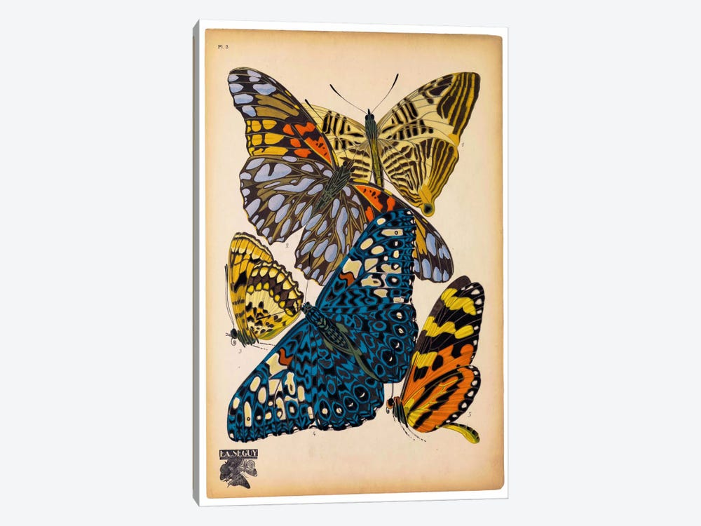 Butterflies Plate 11, E.A. Seguy by Print Collection 1-piece Canvas Art Print