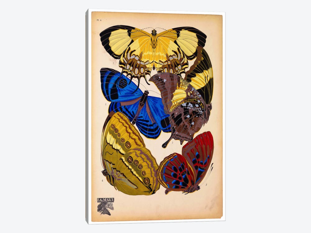 Butterflies Plate 12, E.A. Seguy by Print Collection 1-piece Canvas Wall Art