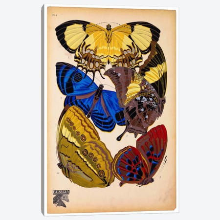 Butterflies Plate 12, E.A. Seguy 3-Piece Canvas #PCA173} by E.A. Séguy Canvas Print