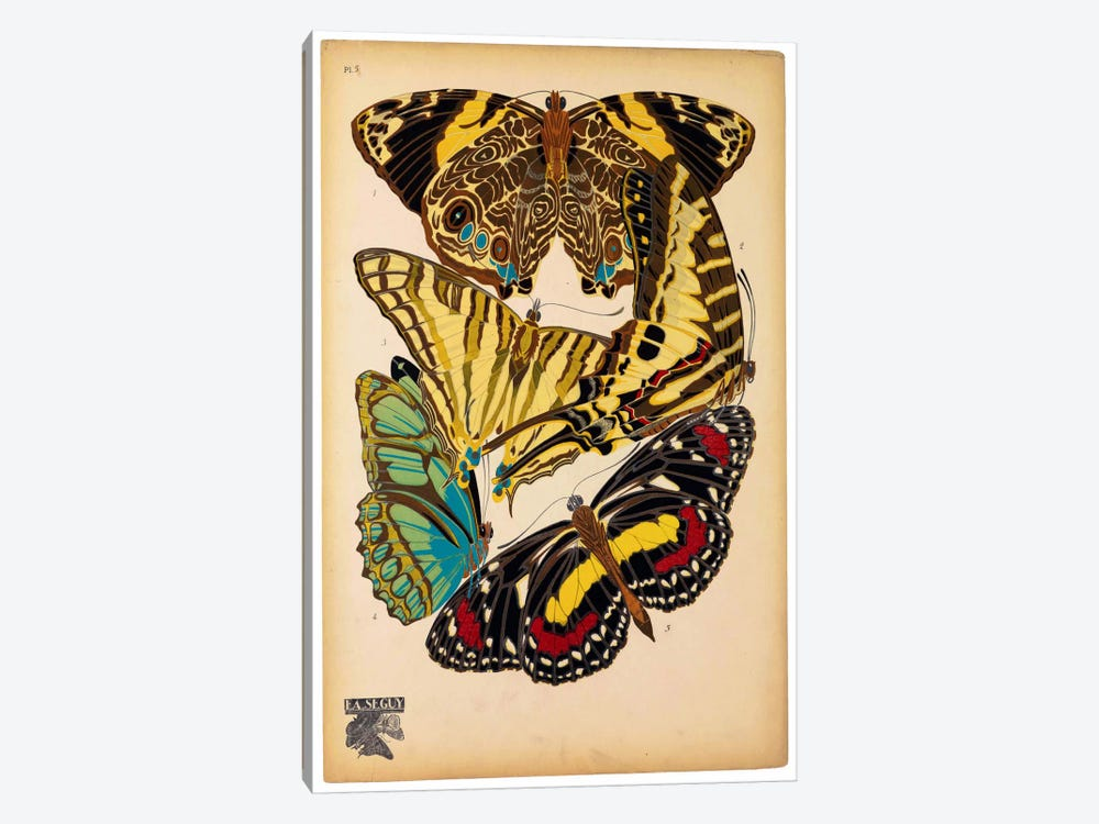 Butterflies Plate 13, E.A. Seguy by Print Collection 1-piece Canvas Print